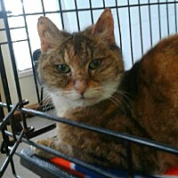 Adopt A Pet :: Bethany - Salem, OR