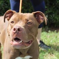 Adopt A Pet :: LOGAN - Daytona Beach, FL