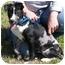 Photo 4 - Catahoula Leopard Dog Mix Puppy for adoption in Portsmouth, Rhode Island - Travis