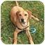 Photo 1 - Hound (Unknown Type)/Hound (Unknown Type) Mix Puppy for adoption in Milton, Massachusetts - Georgia