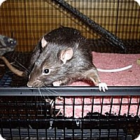 Adopt A Pet :: Dos - Greenwood, MI