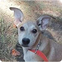 Adopt A Pet :: Cassidy - Staunton, VA