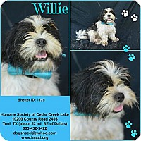 Adopt A Pet :: Willie - Plano, TX