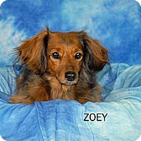 Adopt A Pet :: Zoey - Ft. Myers, FL