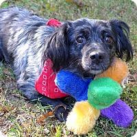 Adopt A Pet :: Fresca - Mocksville, NC