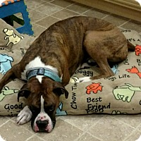 Adopt A Pet :: Snuggles *courtesy post* - Manassas, VA