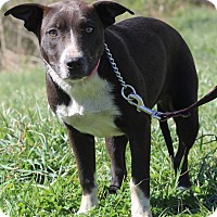 Adopt A Pet :: Shamrock - Waldorf, MD