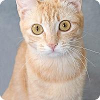 Adopt A Pet :: Sue - Encinitas, CA