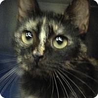 Adopt A Pet :: Joy - Sarasota, FL