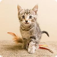 Adopt A Pet :: Genoa - Chicago, IL