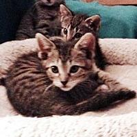 Adopt A Pet :: Scout 2 - Bulverde, TX