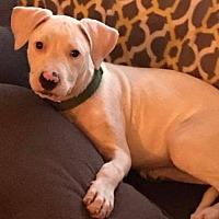 Adopt A Pet :: Butters - Livonia, MI