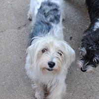Adopt A Pet :: Ellie - Fort Atkinson, WI
