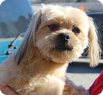 Shih Tzu Mix Dog for adoption in McDonough, Georgia - Dayna