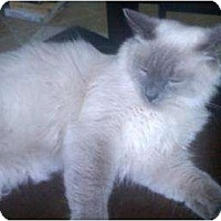 Adopt A Pet :: Zoraya - Franklin, NC
