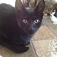 Adopt A Pet :: Beauty - East Hanover, NJ