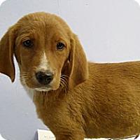 Adopt A Pet :: May - Philadelphia, PA