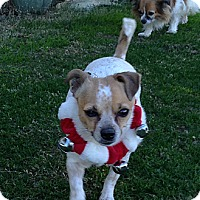 Adopt A Pet :: Ellie May - Scottsdale, AZ