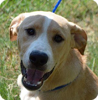 Labrador Retriever Mix Puppy for adoption in Glenburn, Maine - Dempsey