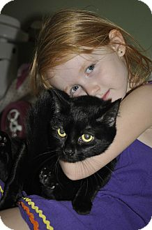 Domestic Shorthair Cat for adoption in New Smyrna Beach, Florida - Sweets (Super sweet and loving