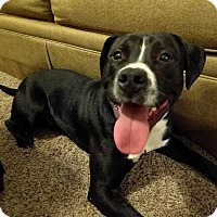 Adopt A Pet :: Murphy - Toledo, OH
