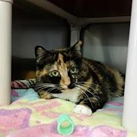 Adopt A Pet :: Cali - Chippewa Falls, WI