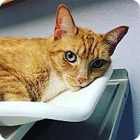 Adopt A Pet :: Earl - Santa Cruz, CA