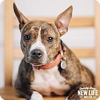 Adopt A Pet :: Buttercup - Portland, OR