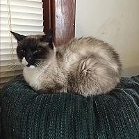 Adopt A Pet :: Precious - Hampton, VA