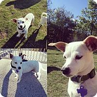 Adopt A Pet :: Aster - San Antonio, TX