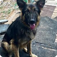 Adopt A Pet :: JACK - Lithia, FL