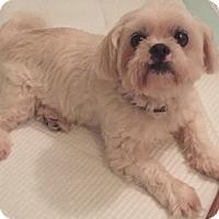 Adopt A Pet :: Hunter - Jasper, TN