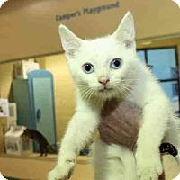 Adopt A Pet :: JAKE - Pittsburgh, PA
