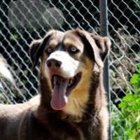 Adopt A Pet :: JR - Wichita, KS