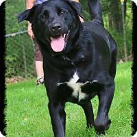 Adopt A Pet :: Paris - Shippenville, PA