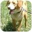 Photo 1 - Beagle/Border Collie Mix Dog for adoption in Huntingdon, Pennsylvania - Wilson