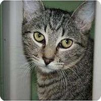 Adopt A Pet :: Monte - Canoga Park, CA