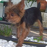 Adopt A Pet :: Rory - CAPE CORAL, FL