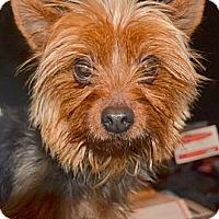 Adopt A Pet :: Mickie - Greensboro, NC