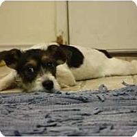 Adopt A Pet :: Corwin - Arlington, TX