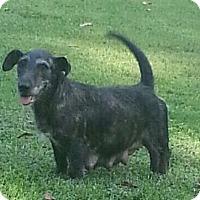 Adopt A Pet :: Momma Elvisina - Staunton, VA