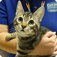 Adopt A Pet :: GUS - Diamond Bar, CA