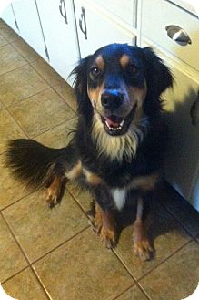 Border Collie Mix Dog for adoption in Carlsbad Springs, Ontario - Patton - Courtesy Listing