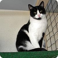 Adopt A Pet :: Jasper - Prescott, AZ