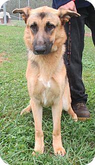 German Shepherd Dog Mix Dog for adoption in Reeds Spring, Missouri - Yalin