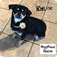 Adopt A Pet :: Khloe---Courtesy Listing - Fort Worth, TX