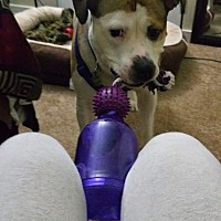 Adopt A Pet :: Duke - Connecticut - Fulton, MO