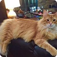 Adopt A Pet :: Paddington - Southlake, TX
