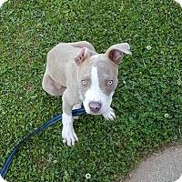Adopt A Pet :: Faulkner - Atlanta, GA