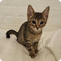 Adopt A Pet :: Sandie - Templeton, MA